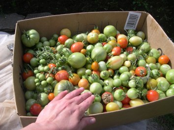Cherry Tomatoes will be washed in water and vinegar as well.