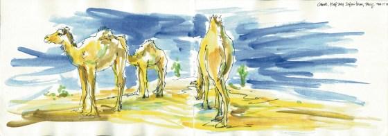 1 Taikoz UAE Safari DPS 1 LR