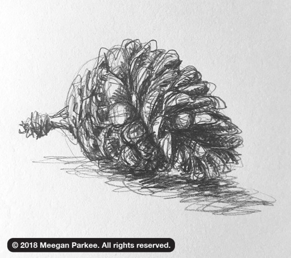 Exercise_1_pinecone_3