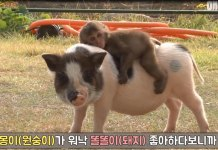 This Adorable Monkey-Pig Pair Will Melt Your Heart