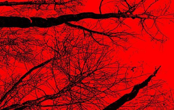Second Teaser Poster For Adam Wingard & Simon Barrett's 'The Woods' Revealed 10