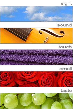 all 5 senses