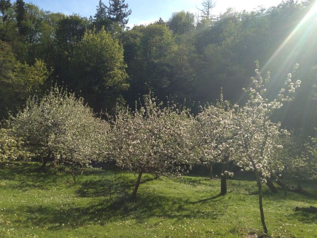 pipers_orchard2