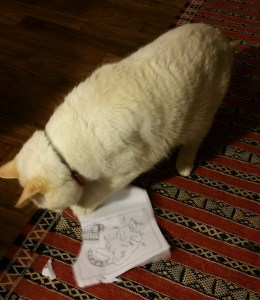 "Charlie cat shredding a ""cats behaving badly card."""