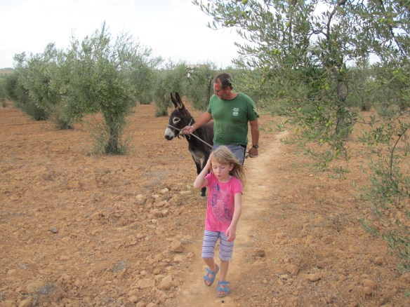 Taking Bolly out for his first walk in the olive grove.