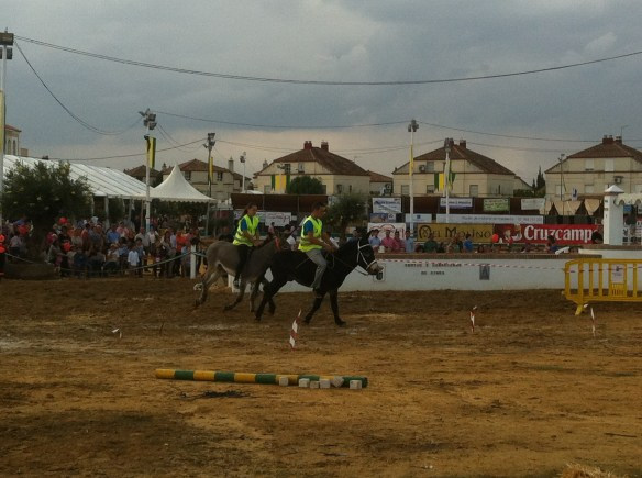 Donkey racing - not the most elegant sport, but great fun to watch.