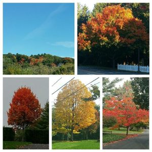 Fav Foto Friday Fall Color Collage 1