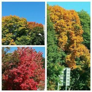 Fav Foto Friday Fall Foliage Collage 2