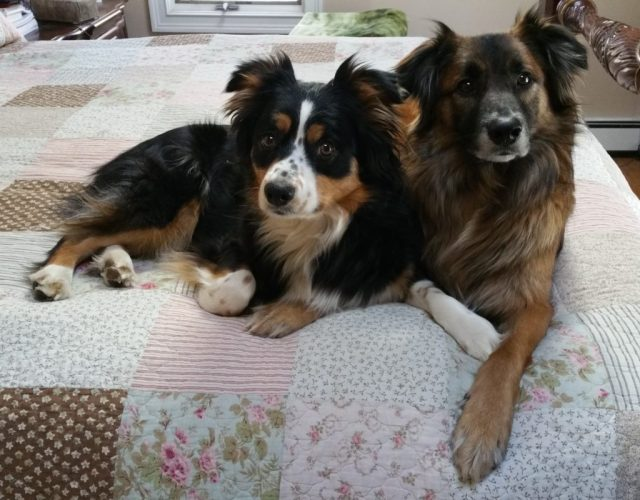 Sawyer Brown & Maggie Mae on the bed