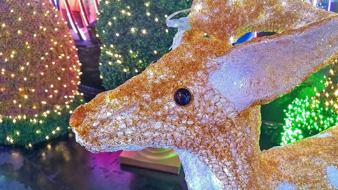 Reindeer at Universal Journey 2016. This is not Rudolph though!