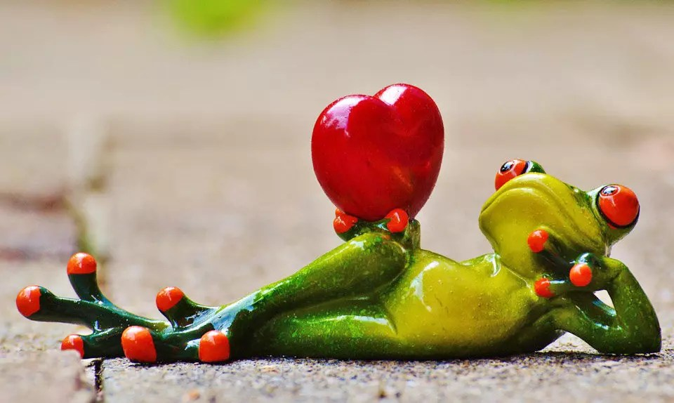 The Valentine's Day Frog. Your perfect V Day lover!