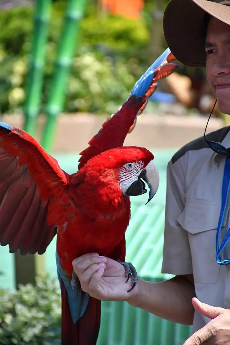 Ocean Park Hong Kong - Macaw Performance