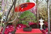 Sakura Japan Fair 2018: Gorgeous Blossoms & an Electone Performance