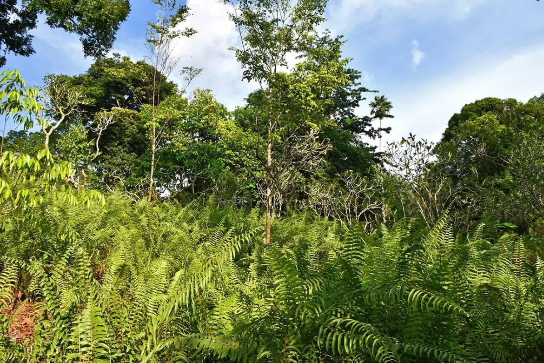 Singapore Botanic Gardens greenery and shrubs.
