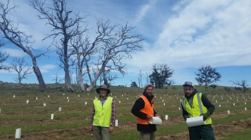 Planting by Upper Snowy Landcare, Conservation Volunteers and Green Army