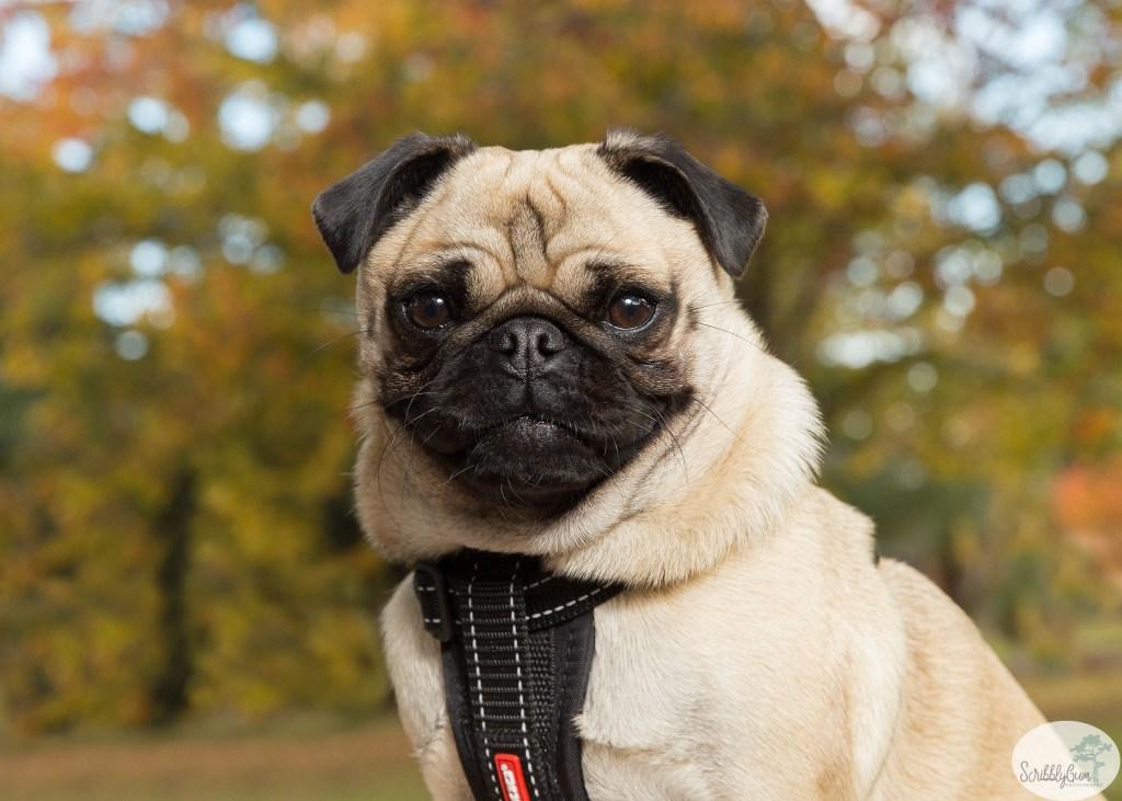 Professional Pet Dog Photographer