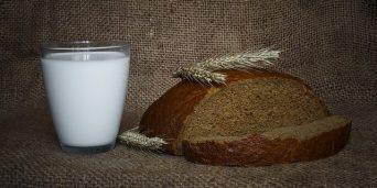 La Metamorfosi: Grete offre pane e latte al fratello