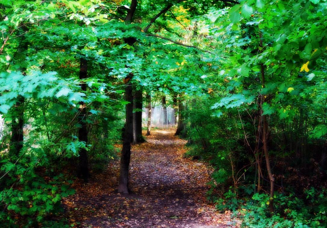 fairy_tale_forest_forest