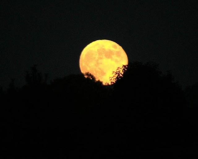 harvest_moon_1