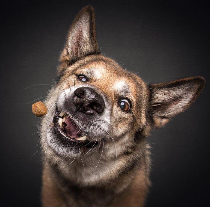 Dog Catching Treat