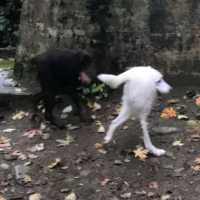When The Panorama Option Makes Your Dogs Look Like Sonic The Hedgehog