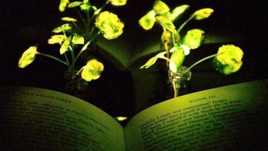 Photo of MIT წარმოგიდგენთ ნამდვილ ცოცხალ ყვავილებს, რომლებიც მომავლის სახლებს გაანათებენ