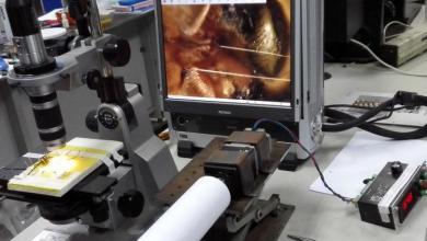 Photo of შესაძლოა ობობის ქსელი რობოტების კუნთების შესაქმნელად გამოიყენონ