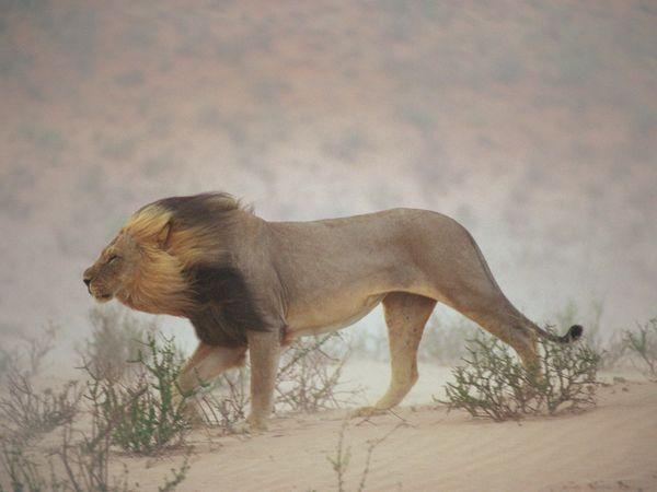 Photo of National Geographic: ველური ბუნების ფოტოგალერეა