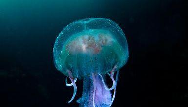 Photo of ბრიტანული ველური ბუნების საუკეთესო სურათები National Geographic-ისგან