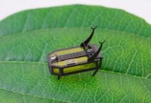 Photo of რობოტი-ხოჭო, რომელსაც ფუნქციონირებისთვის მხოლოდ სპირტი ჭირდება