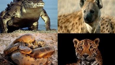 Photo of ცხოველის მიერ ადამიანის მოკვლის 10 ყველაზე საშინელი ვარიანტი