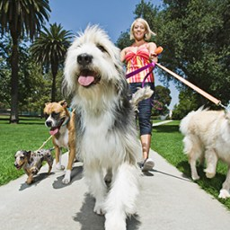 Could walking your dog improve your health?