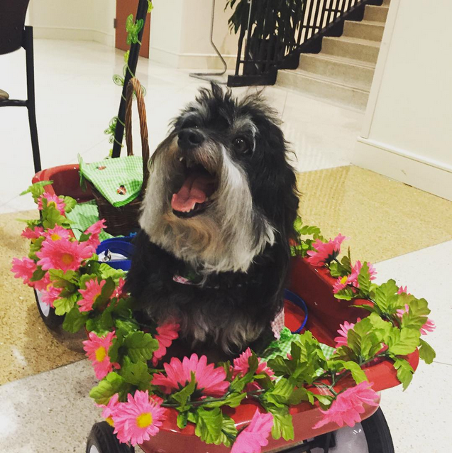 Dogs bring joy to hospital patients