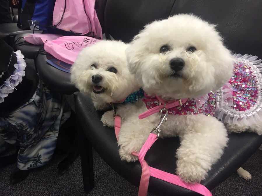 Sweet pooches bring cheer to hospital staff and patients
