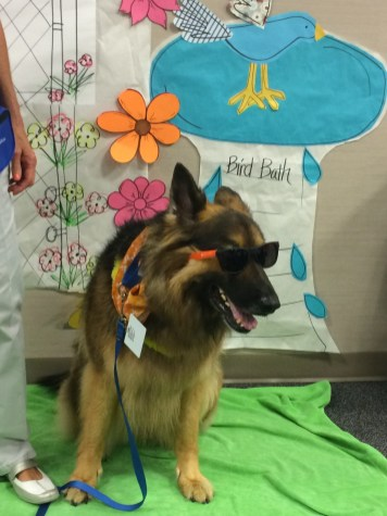 Therapy dog decked out in summer best