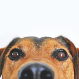 4 things you need to know about pets and your allergies
