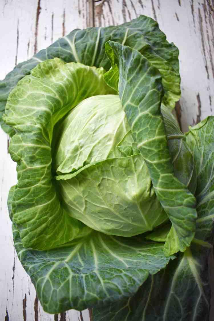 Drum Head Cabbage