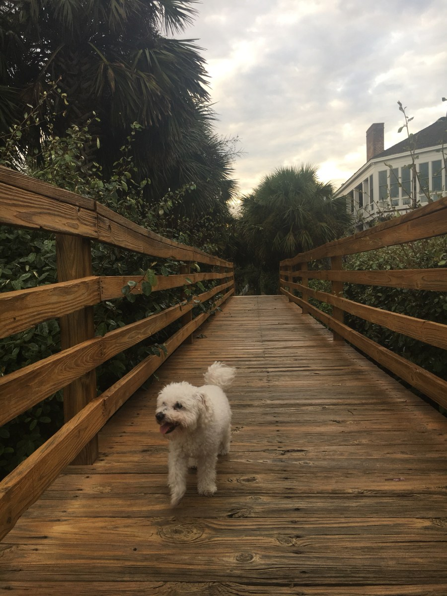 How I Got My Dog & Maddie 15 Years Later - SCsScoop.com