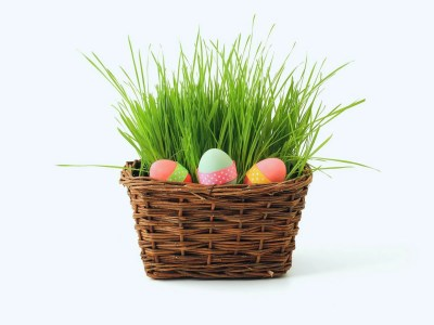 SCS Technologies - easter
