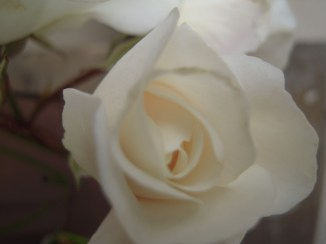 Flowers 070
