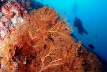 Wall Drift dives