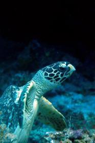 Matava_turtle