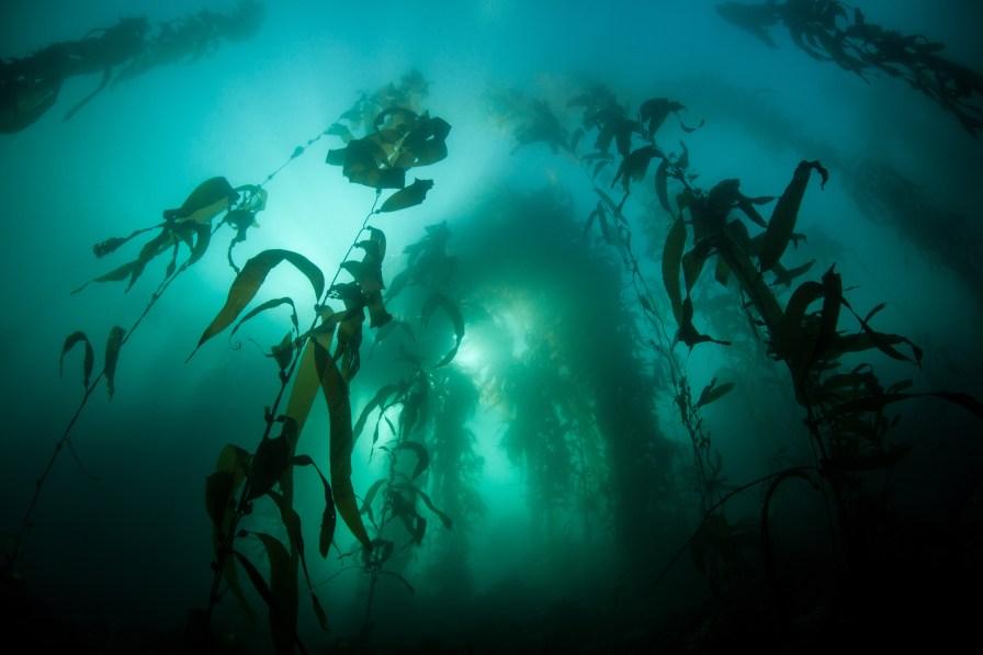 Channel Islands, and Catalina kelp, sea lions, and sea grass make for amazing, if not eerie images.