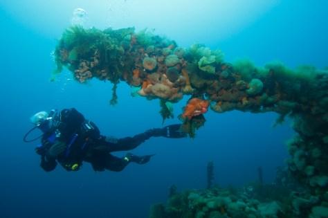 Deck-gun-on-the-Saganaga_Bell-Island_Debbie-Stanley_web