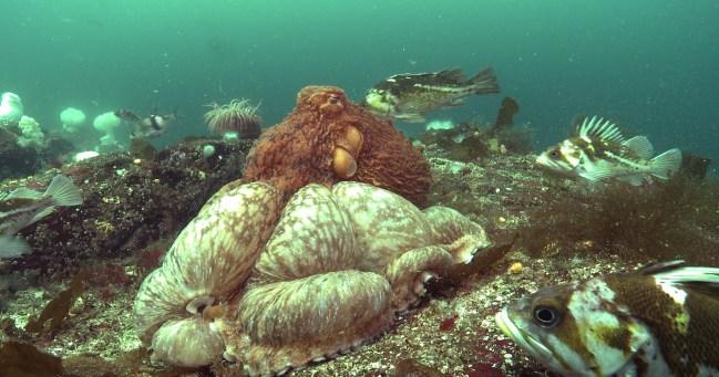 Scuba Diving Barkley Sound