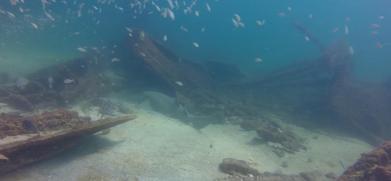 Marine Life on Vamar -a nurse shark (Photos Courtesy of Daly's Dock and Dive)