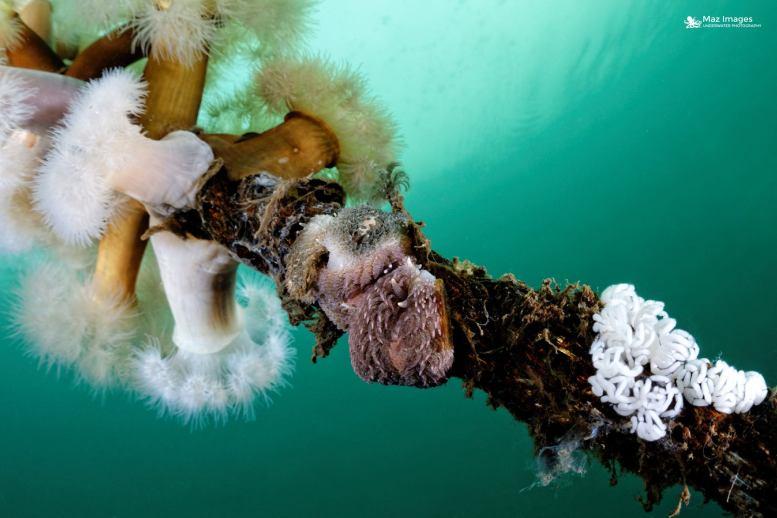 nanaimo wreck diving
