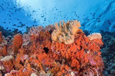reefs_2