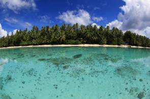 Turquoise water and palm trees on Pohnpei © Simon Williams, Pohnpei Surf Club