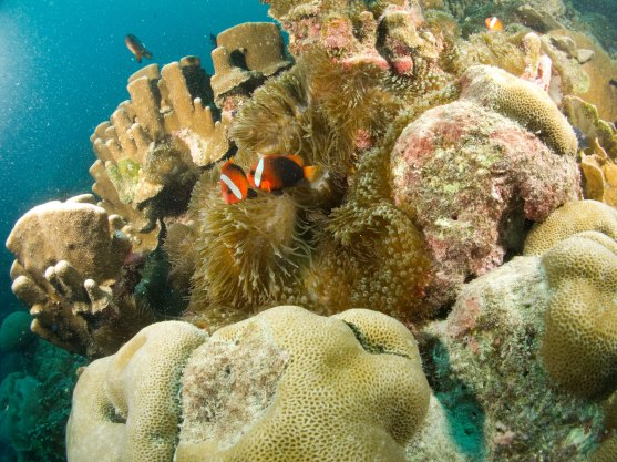 About 45 minutes from Tutuila by boat, the reefs of Aunu'u Island host diverse fish and coral populations. (Photo: Ryan Eckert/NOAA)